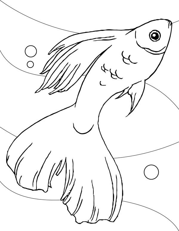 guppy fish coloring pages guppy coloring pages pages guppy fish coloring