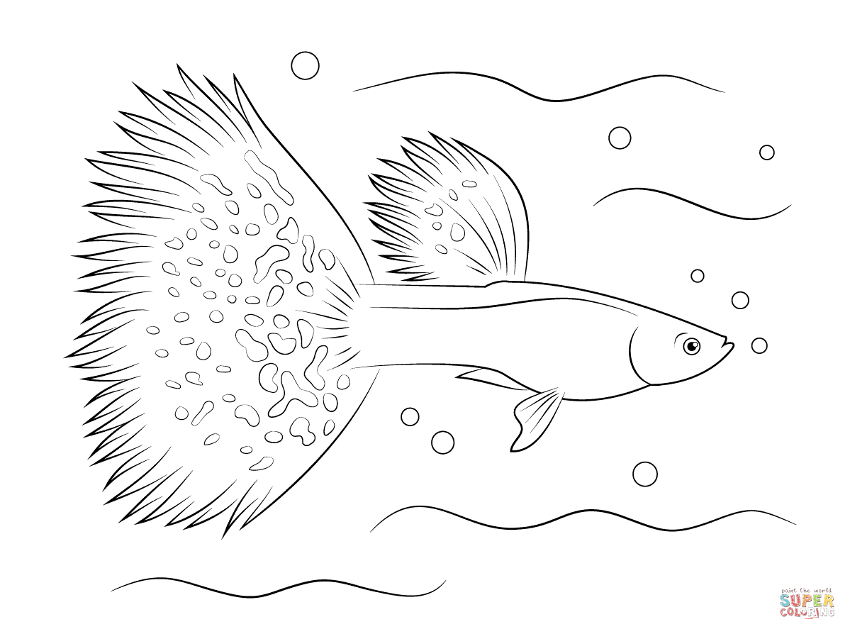 Guppy fish coloring pages