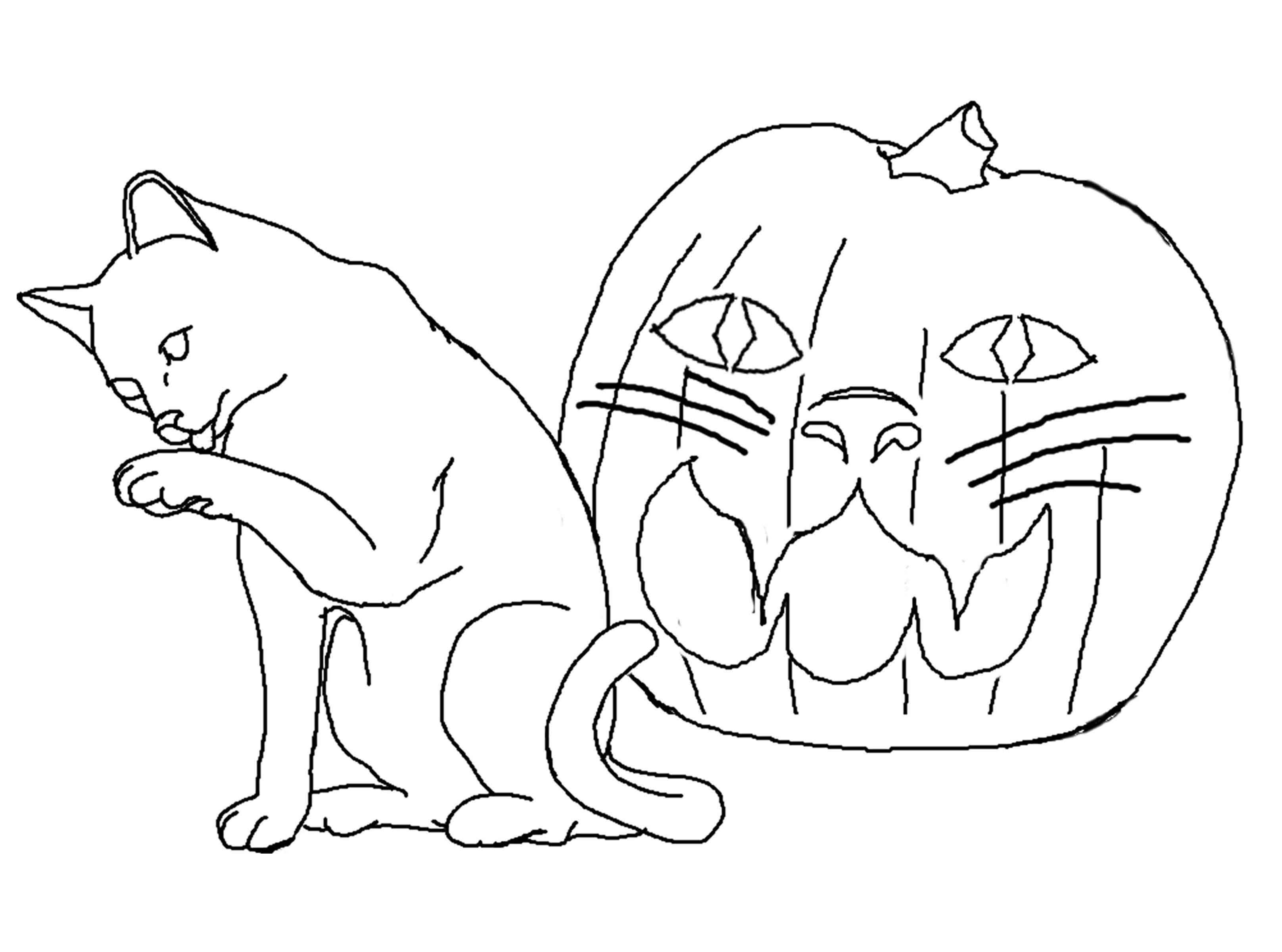 halloween cat coloring page halloween cat coloring pages best coloring pages for kids coloring halloween page cat