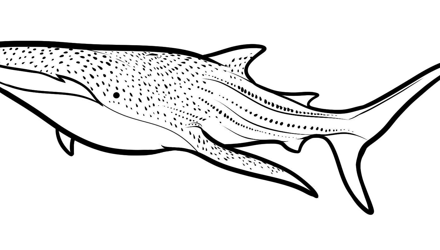 hammer head shark drawing a drawing of hammerhead shark from the top coloring page drawing head shark hammer