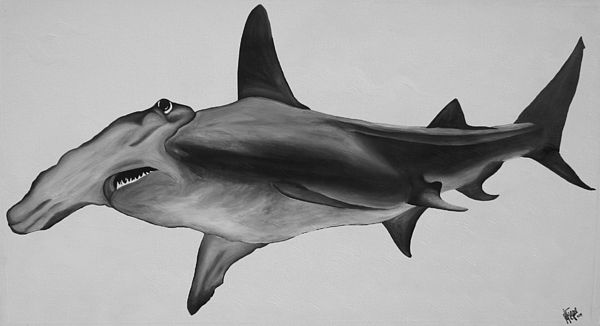 hammer head shark drawing how to draw a hammerhead shark step by step drawing drawing shark head hammer