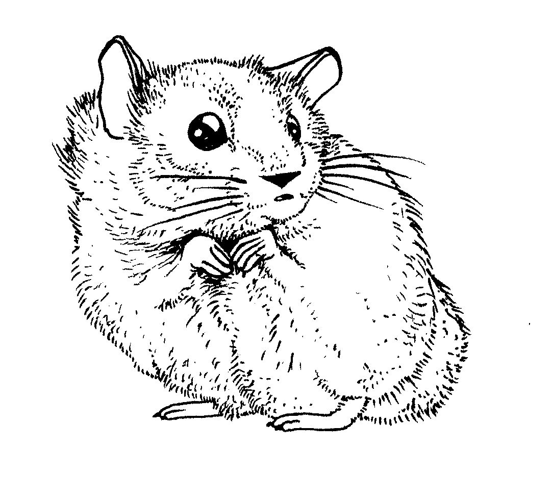 hamster coloring pages to print cute hamster coloring pages free printable coloring pages hamster print to coloring pages