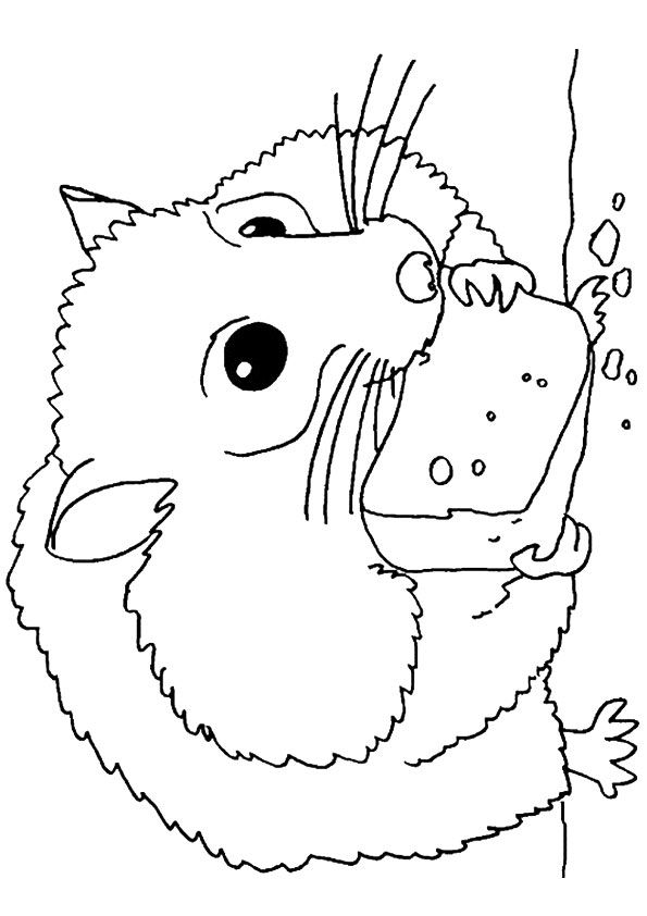 hamster coloring pages to print hamster coloring pages download and print hamster print hamster coloring to pages
