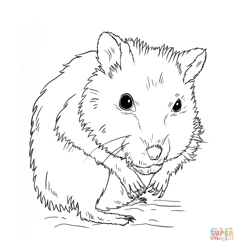 hamster coloring pages to print hamster coloring pages getcoloringpagescom coloring pages hamster to print