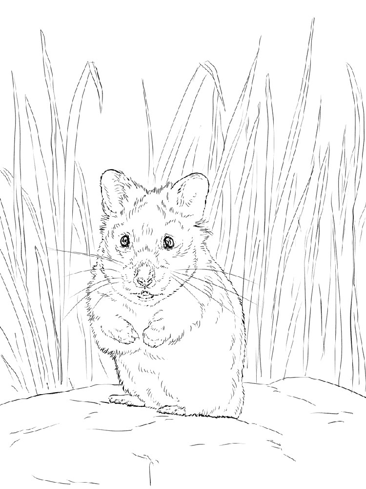 hamster coloring pages to print hamster facts to print coloring pages hamster