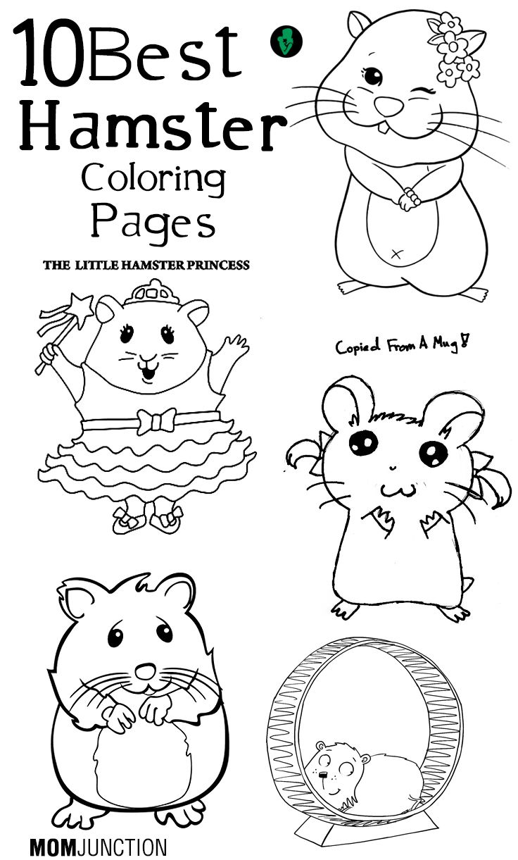 hamster coloring pages to print pin on hamster hamster pages coloring to print