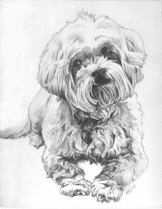 havanese puppy coloring pages dog coloring pages free havanese pages puppy coloring