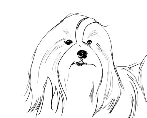 havanese puppy coloring pages havanese coloring page free printable coloring pages puppy coloring pages havanese