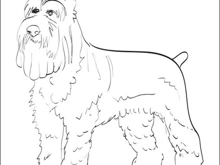 havanese puppy coloring pages havanese coloring pages at getcoloringscom free coloring puppy havanese pages