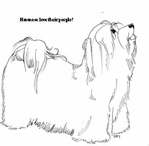 havanese puppy coloring pages havanese coloring pages at getdrawings free download coloring puppy havanese pages