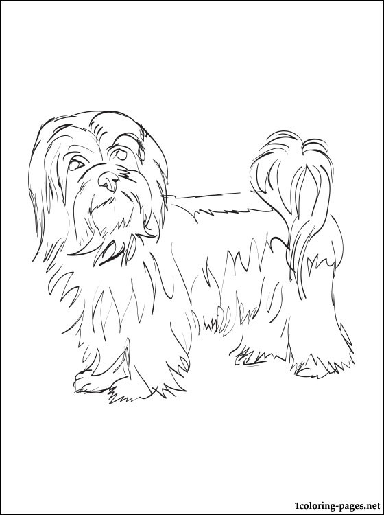 Havanese puppy coloring pages