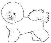 havanese puppy coloring pages havanese coloring pages google search havana silk havanese coloring puppy pages
