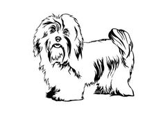 havanese puppy coloring pages havanese coloring pages google search havana silk pages havanese puppy coloring 1 1