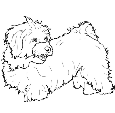 havanese puppy coloring pages havanese coloring pages google search havanese havanese puppy coloring pages