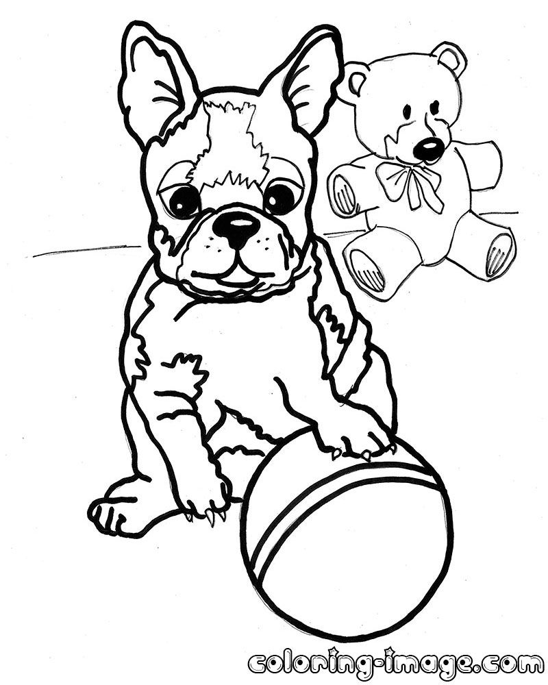 havanese puppy coloring pages havanese coloring pages jawar coloring pages puppy havanese 1 1