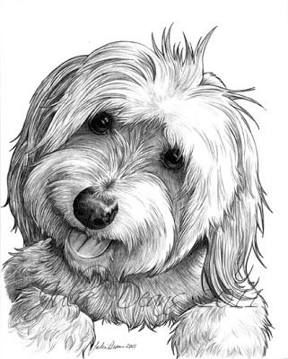 havanese puppy coloring pages havanese drawing at getdrawings free download coloring puppy havanese pages