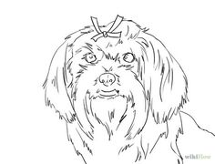 havanese puppy coloring pages havanese health concerns arizona california r39gang puppy havanese coloring pages