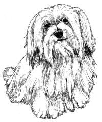 havanese puppy coloring pages havanese puppy coloring pages coloring coloring pages puppy havanese coloring pages