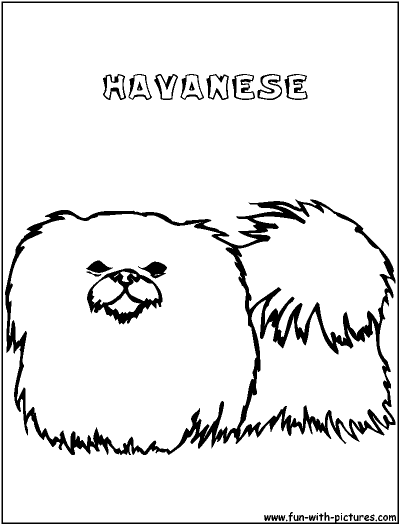 havanese puppy coloring pages royalflushhavanese havanese puppies havanese puppies havanese puppy pages coloring
