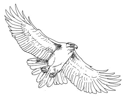 hawk outline how to draw a hawk outline hawk