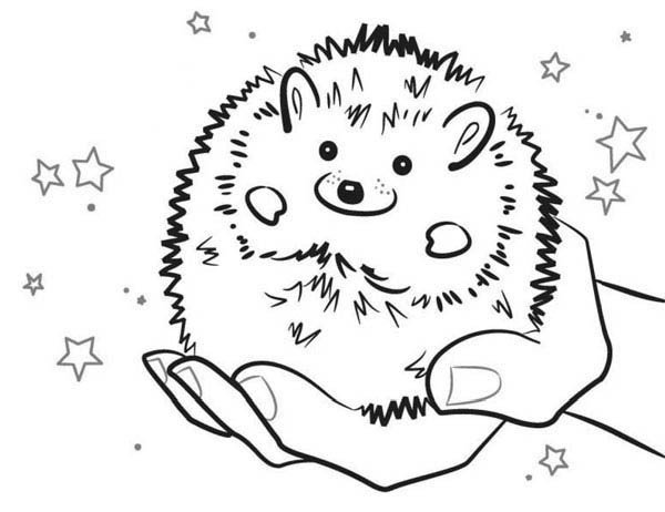 hedgehog pictures to color hedgehog coloring pages download and print hedgehog color hedgehog to pictures