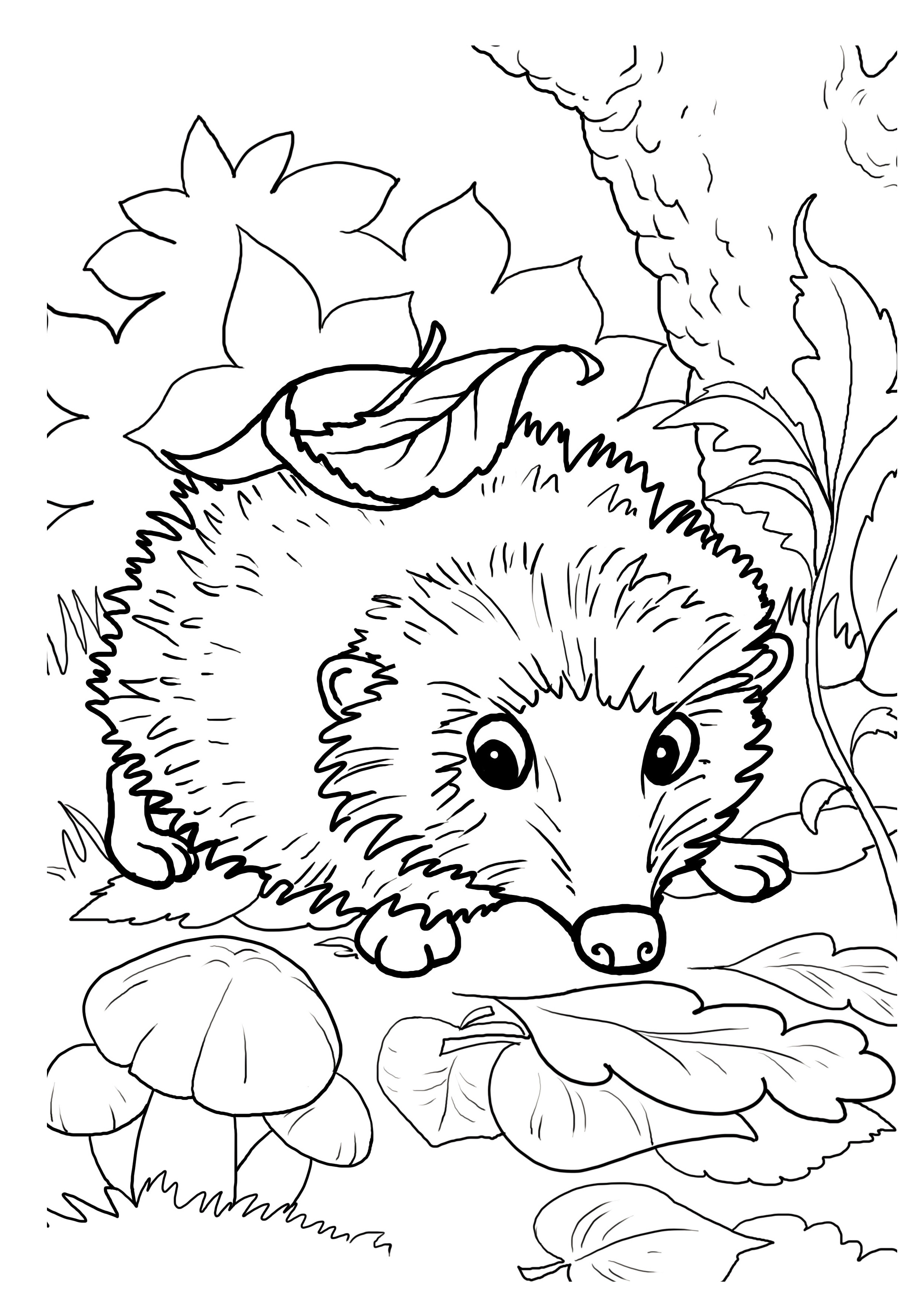 hedgehog pictures to color hedgehog coloring pages download and print hedgehog hedgehog to color pictures