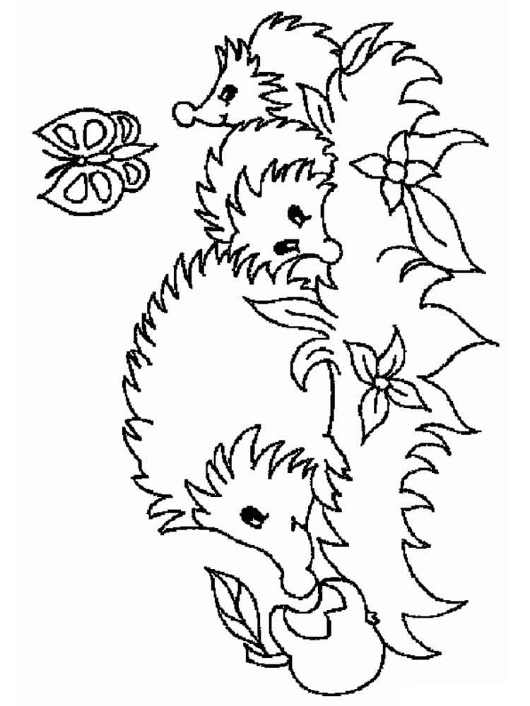 hedgehog pictures to color hedgehog line drawing at getdrawings free download hedgehog pictures to color