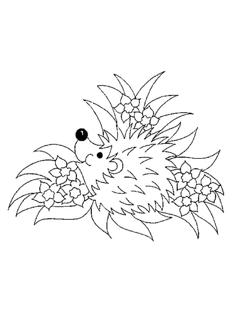 hedgehog pictures to color hedgehogs free printable coloring and activity page for pictures color hedgehog to