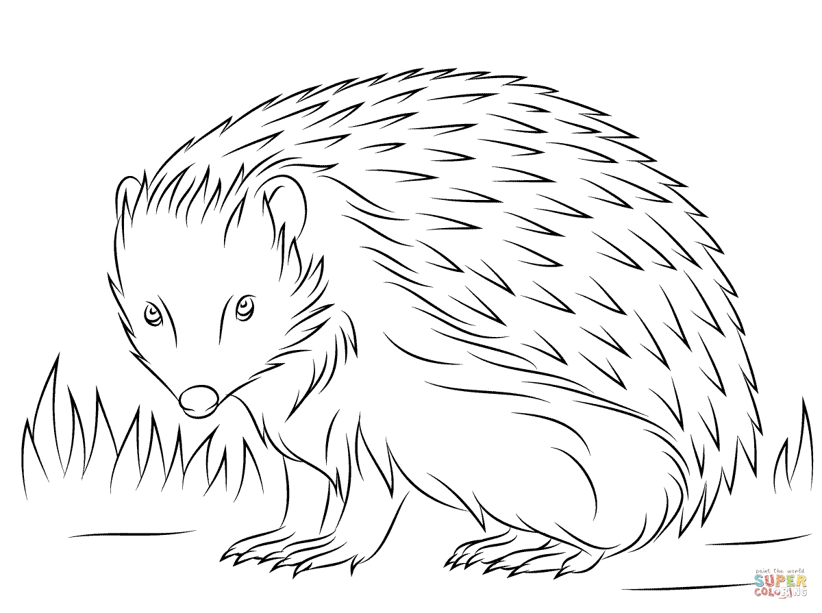 hedgehog pictures to color little hedgehog and other little animals drawing free hedgehog to pictures color