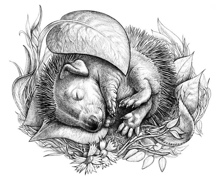 hedgehog pictures to color sonic hedgehog coloring pages sketch coloring page hedgehog pictures color to