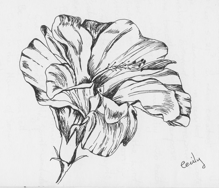 hibiscus drawing black and white hibiscus flowers with monstera leaves hand drawing hibiscus