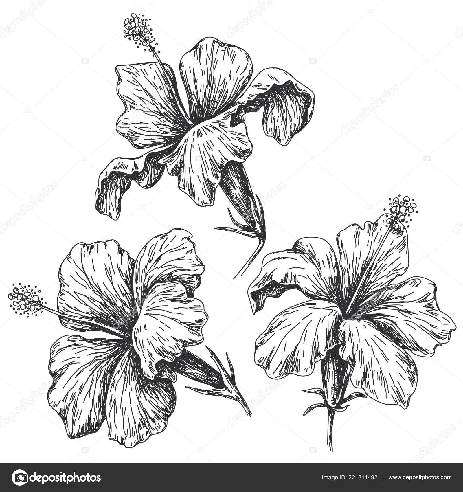 hibiscus drawing hibiscus flower by darklord11222 on deviantart drawing hibiscus