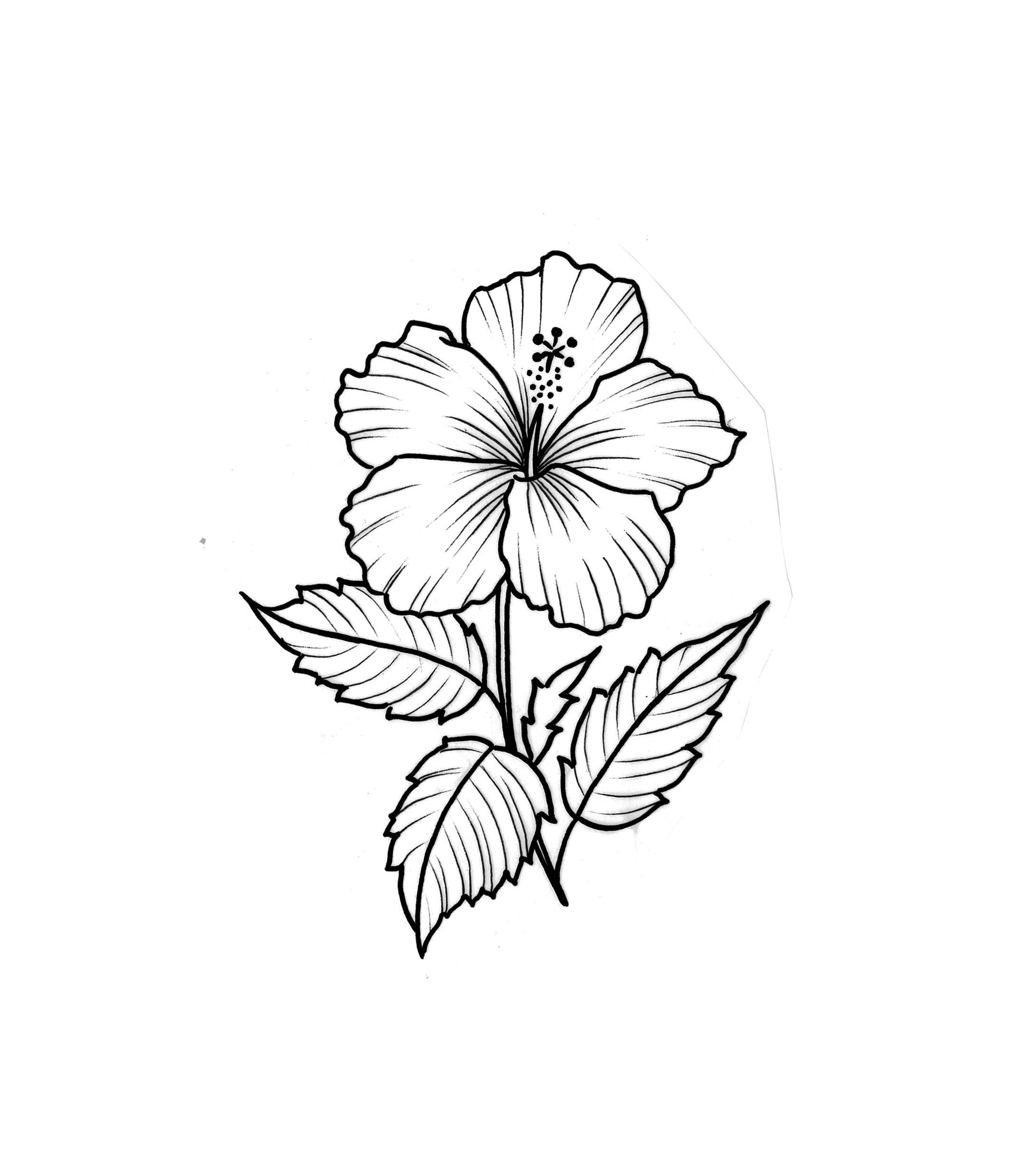 hibiscus drawing hibiscus line drawing  clipart best drawing hibiscus
