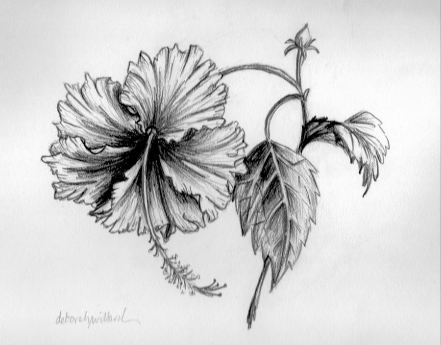 hibiscus drawing pin by jeanie morrissey on coloring pages hibiscus hibiscus drawing