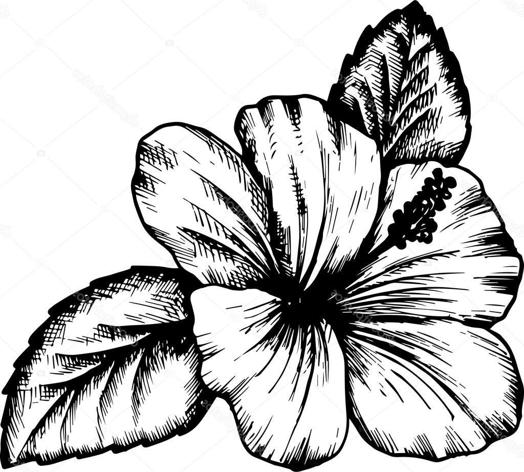 hibiscus drawing pin on tattoos hibiscus drawing