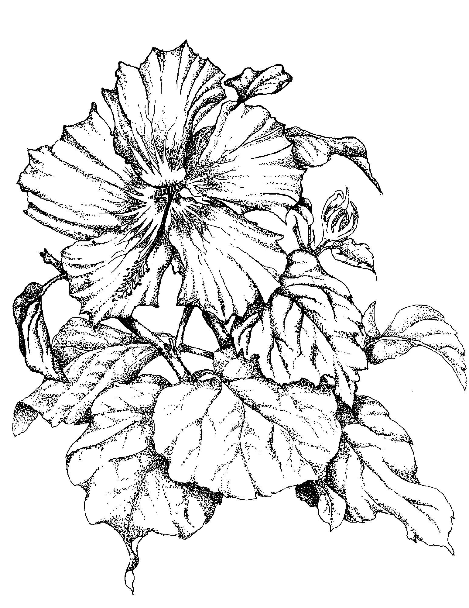 hibiscus drawing simple hibiscus drawing at getdrawings free download hibiscus drawing