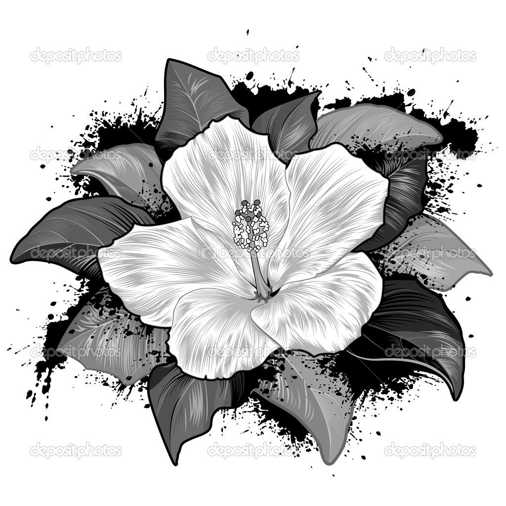 hibiscus drawing sketches of flowers single hibiscus flower flower drawing hibiscus