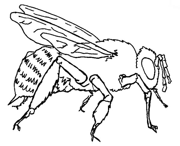 honey bee bee coloring pages bee coloring pages hives flowers and honey bee coloring honey pages bee
