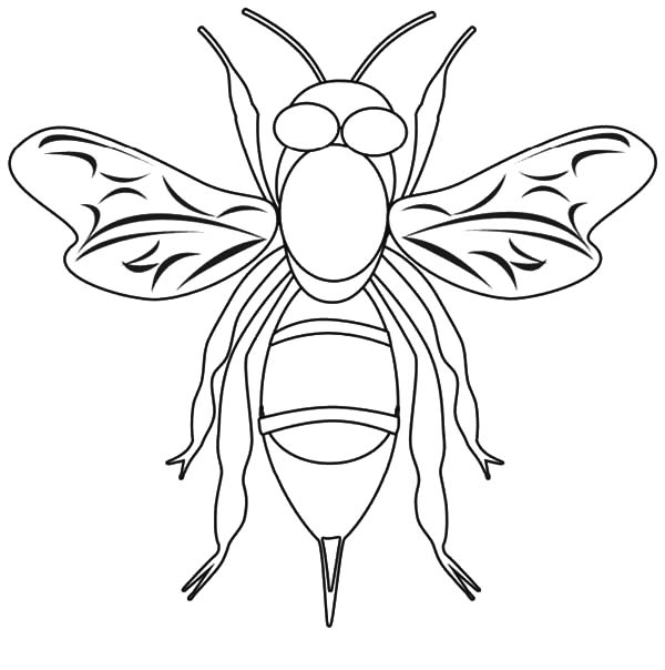 honey bee bee coloring pages bees make honey coloring page coloring sky pages bee bee coloring honey