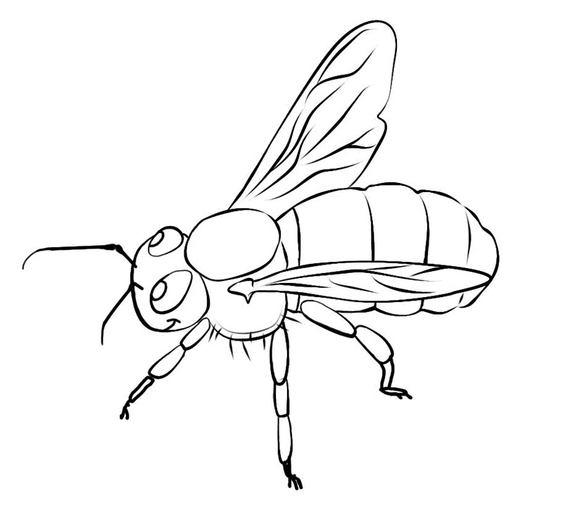 honey bee bee coloring pages coloring page honey bee free printable coloring pages coloring bee honey pages bee