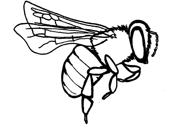 honey bee bee coloring pages coloring pages of honey bees coloring home honey bee bee pages coloring