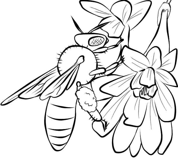 honey bee bee coloring pages cool collection of bee coloring pages stpetefestorg coloring pages honey bee bee