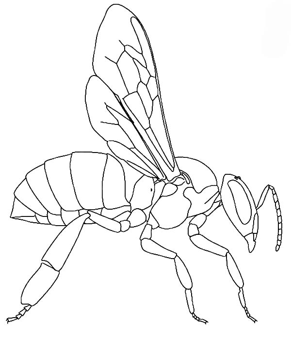 honey bee bee coloring pages cute honey bee coloring pages coloring sky coloring bee bee honey pages