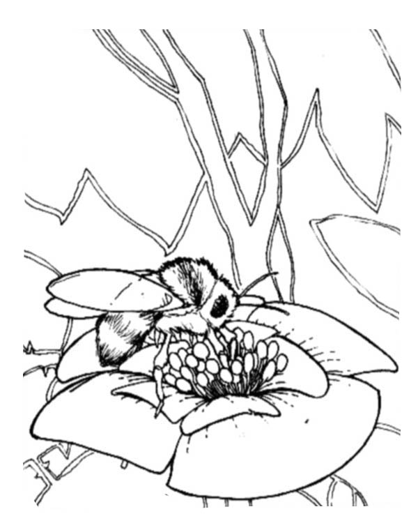 honey bee bee coloring pages free printable bee coloring pages for kids coloring honey bee pages bee