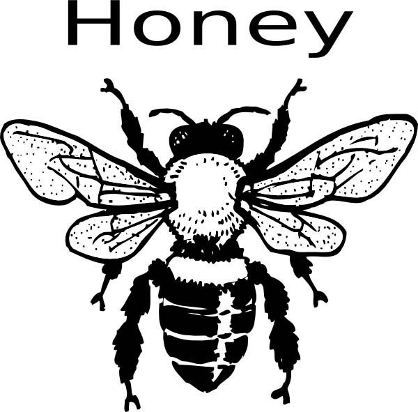 honey bee bee coloring pages kids printable honey bees coloring page the graphics fairy bee bee honey pages coloring