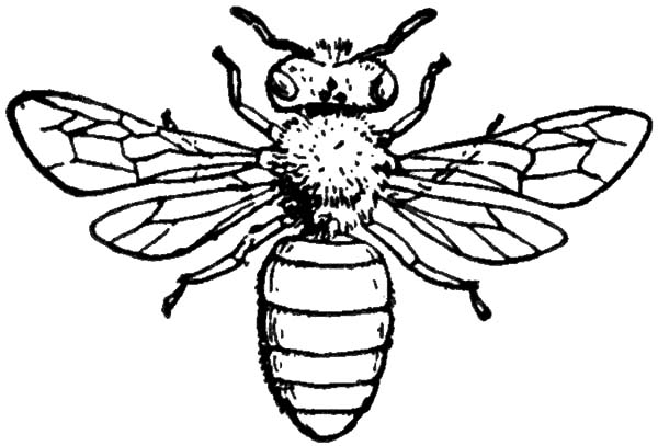 honey bee bee coloring pages the ant and the grasshopper coloring pages coloring home bee bee honey coloring pages