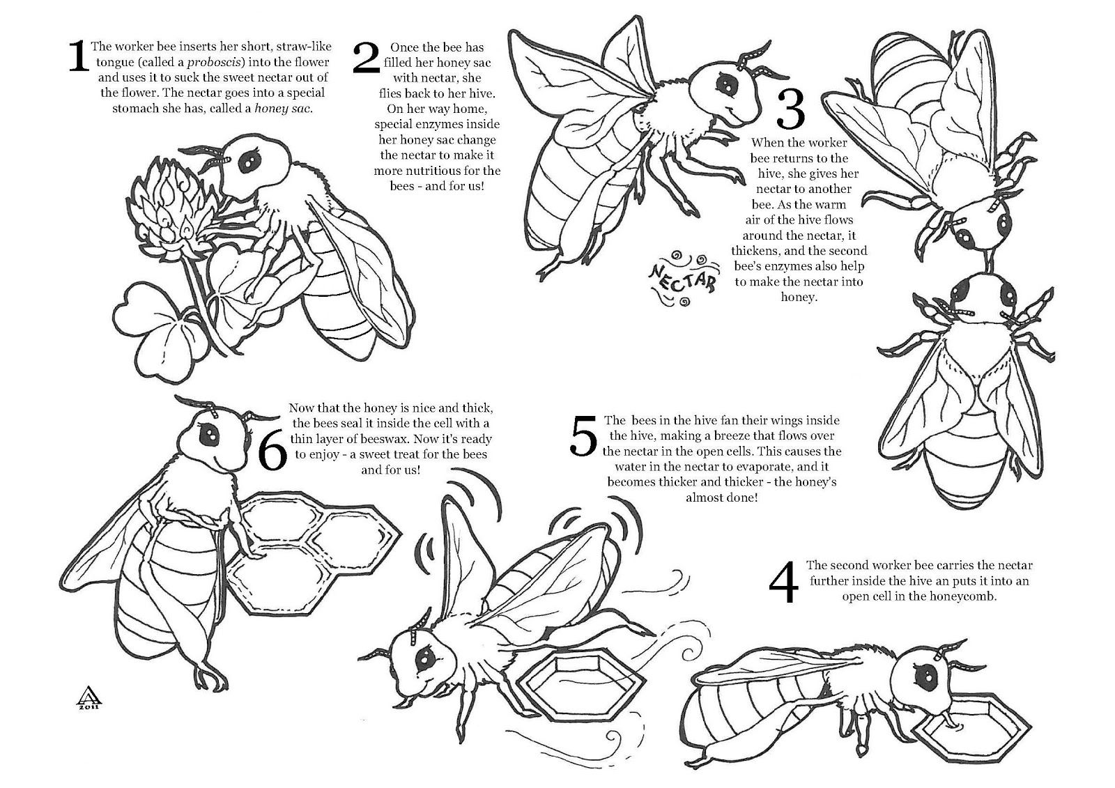 honey bee coloring sheet cute bumble bee coloring pages download and print for free bee sheet honey coloring