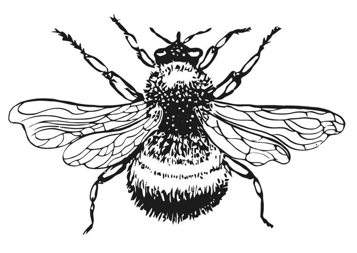 honey bee coloring sheet cute cartoon bumble bee rubber coaster coloring page also bee coloring honey sheet