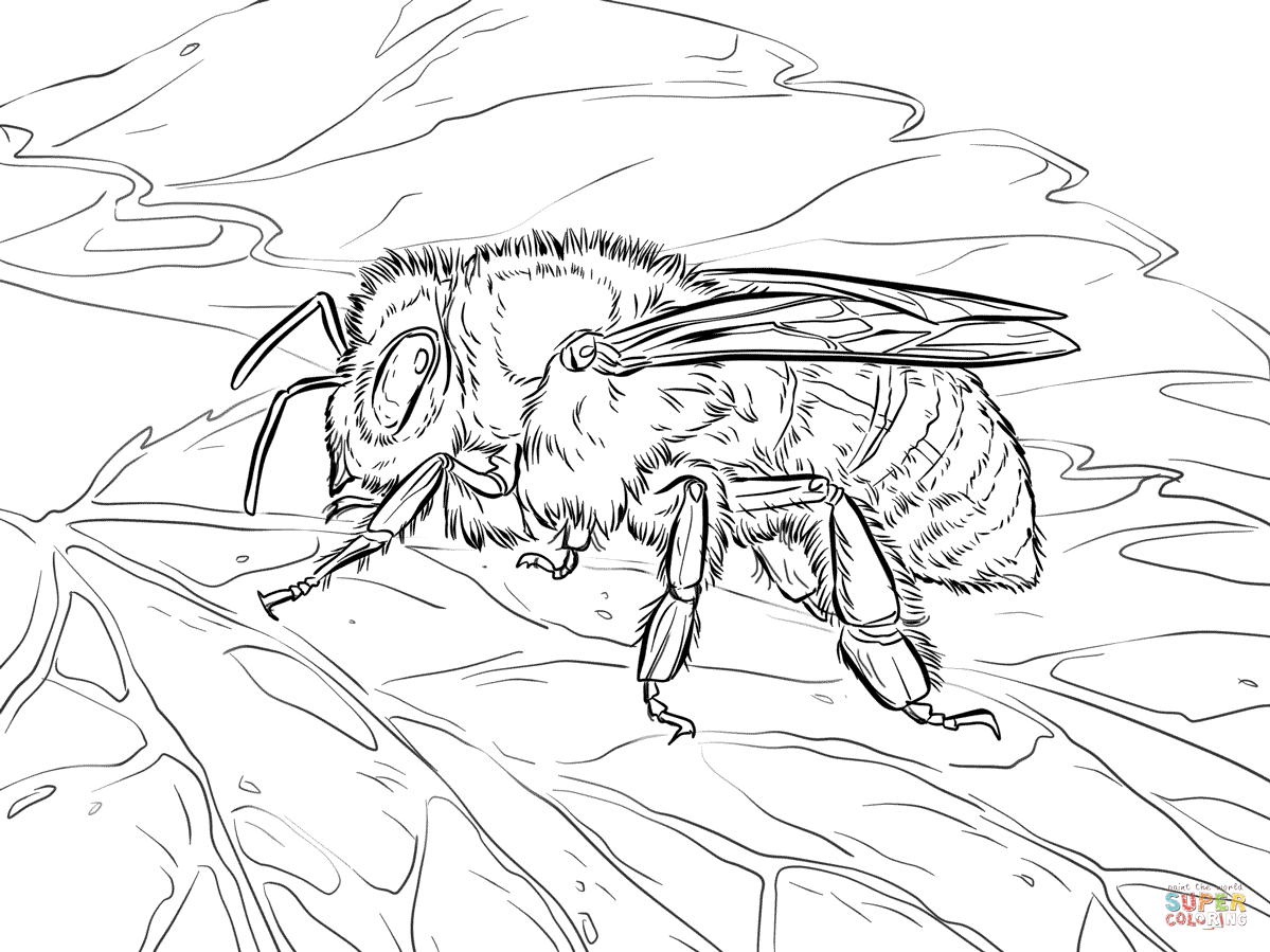 honey bee coloring sheet kids printable honey bees coloring page the graphics fairy honey bee coloring sheet