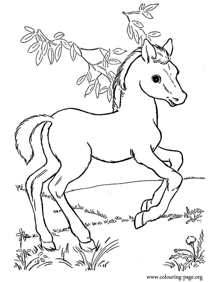 horse coloring image baby horses coloring pages coloring home horse coloring image